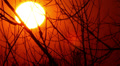 sun in  red sky through tree branches.  Sunset Time lapse Footage