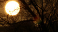 sun through tree branches. Landscape HD Footage