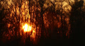 Beautiful sun at sunrise and tree branches. Time lapse HD Footage