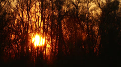 Beautiful sun at sunrise and tree branches. Time lapse - stock footage