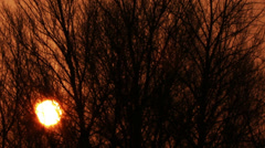 sun in  red sky through tree branches.  Sunrise Time lapse - stock footage