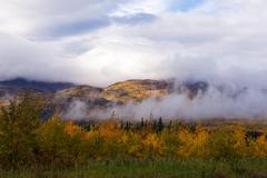 Foggy fall boreal forest taiga hills yukon canada Stock Photos