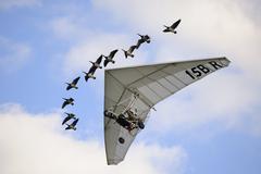 Ultra light aircraft an geese Stock Photos
