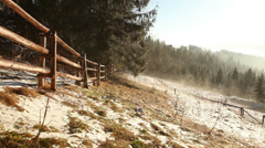 Foggy spring morning. Mist flows between firs Stock Footage