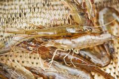 Prawns in fishing net Stock Photos