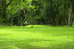 Garden green grass Stock Photos