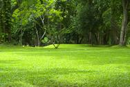 Stock Photo of garden green grass