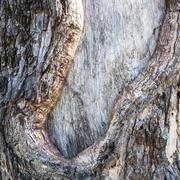 realistic wood tree texture - stock photo