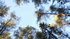 Rotating shot of trees against blue sky Stock Footage