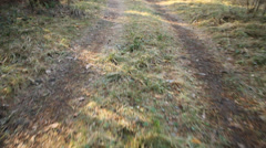Footpath in the forest Stock Footage
