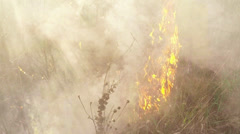 the fire in the desert, burning dry grass and bushes - stock footage