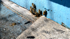 Blue hive with bee Stock Footage