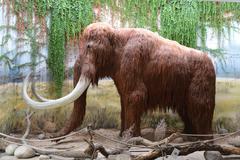 Mammoth Stock Photos