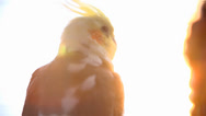 Stock Video Footage of Bird Watching Sunset Shining