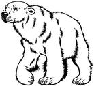 Stock Illustration of polar bear black white