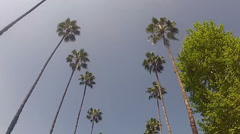 Dolly Through Palms - stock footage