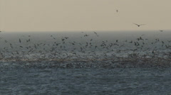 Seagulls over shallow water at North Sea coast, The Netherlands Stock Footage