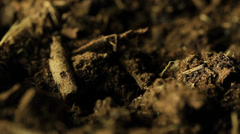 Cicada emerging from ground. Stock Footage