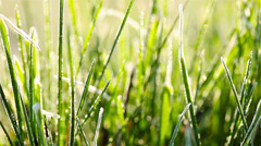 Green grass and dew drops frozen. 4K. FULL HD, 4096x2304 Stock Footage