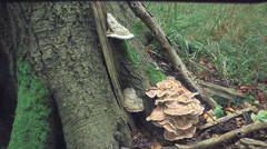 Treetrunk With Mushrooms Steady Shot Stock Footage