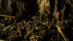 Cicada emerging from the earth Stock Footage
