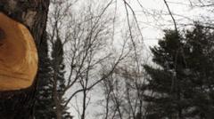 Cut Tree Limb Stock Footage