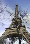 Eiffel Tower with Bare Tree - stock photo