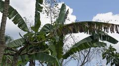 Dominican agriculture Stock Photos