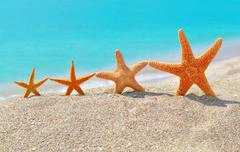 starfishes on the beach - stock photo