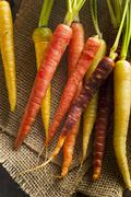 colorful multi colored raw carrots - stock photo