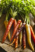 Colorful multi colored raw carrots Stock Photos