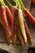 colorful multi colored raw carrots - stock photo
