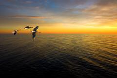 three geese - stock photo