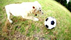Puppy chasing football in park Stock Footage