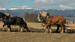 Draft horse team from side - stock footage
