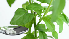 Stock Video Footage of Stevia rebaudiana, the herbal support for sugar