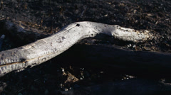 Burnt Wildfire Charred Logs Parallax Slide Right Stock Footage