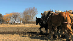Stock Video Footage of Draft horse team and old farm