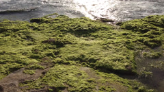 Sea landscape with stones coverd with algae Stock Footage