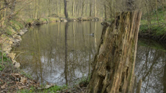 Still creek in the springtime Stock Footage