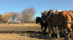 Draft horse team and old farm-24fps - stock footage