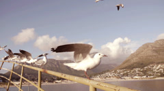 Sea gulls in slow motion - stock footage