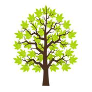 Tree maple with green leafage Stock Illustration