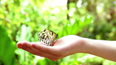 Girl has a butterfly in her hand Stock Footage