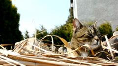 Cat on the garden Stock Footage