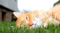 Sleepy ginger cat resting Stock Footage