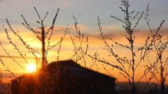 Branches of the bush at sunset Stock Footage