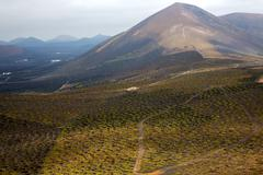 winery lanzarote spain la crops  cultivation viticulture - stock photo