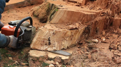 Man cutting tree with chainsaw Stock Footage