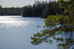pine tree branch a glittering lake - stock photo